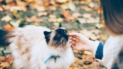 Katze Erstausstattung Katze - Trockenfutter sollten keine Mahlzeit ersetzen