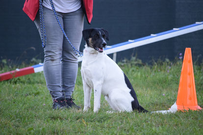 HAT, Hundealltagstauglichkeit, Hundeprüfung, Hundeschule Animal Train, Hundetraining, Linz Land, Neuhofen