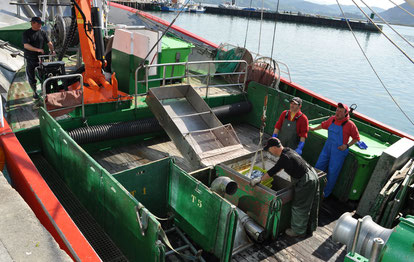 Pescando anchoas