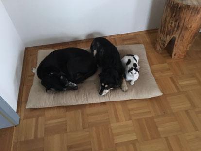 Mit allen Hunden, hier mit Mocca und Basta, versteht sich Coco prächtig!