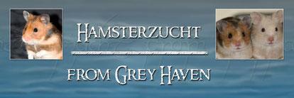 """Gold- und Teddyhamsterzucht ,,from Grey Haven"""" von Lena Krüper aus Hildesheim/Niedersachsen"""