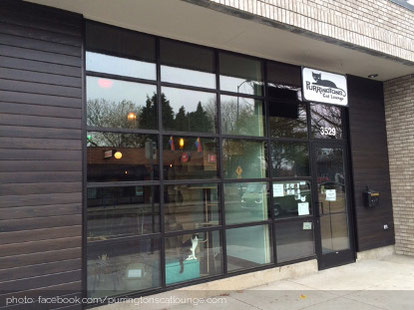 purringtons-cat-lounge-portland