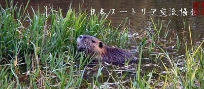 Nutria in Japan