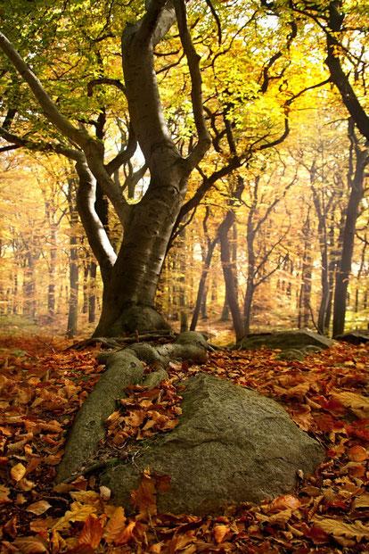 I boschi di Leonessa
