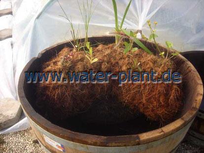 Eine Pflanzrolle bildet die Sumpfzone zum Bepflanzen