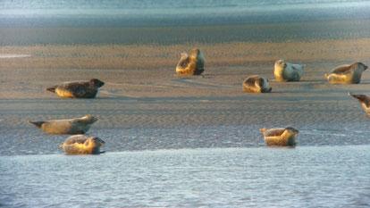 Guide Baie de Somme observation phoques traversée de la Baie de somme activité nature