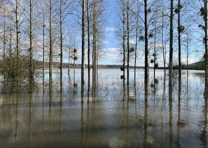 Mouron (08), aujourd'hui, confluence Aisne Aire, au pic de crue.