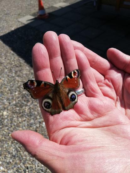 Ein schöner Schmetterling landete auf meine Hand