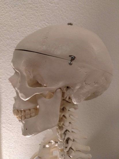 metodo feldenkrais madrid fisioterapeuta jaime polanco vivirenmovimiento clases dolor de espalda