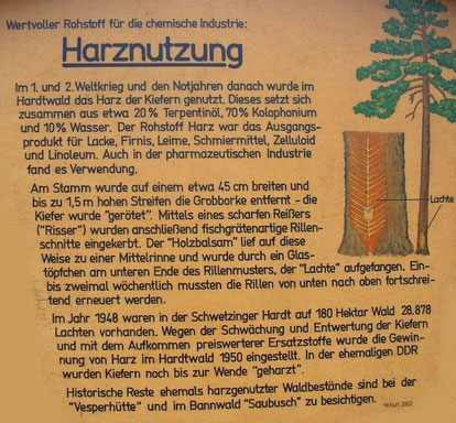 """Schautafel """"Harznutzung"""" auf dem Waldlehrpfad Walldorf / Reilingen."""