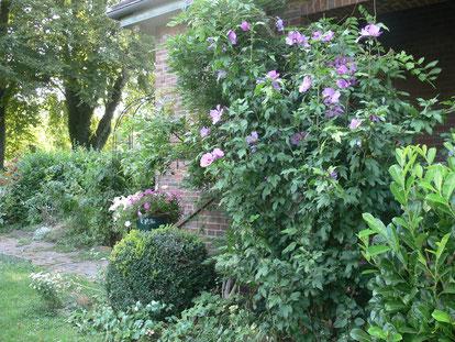 Ansicht von Garten und Eingangsbereich