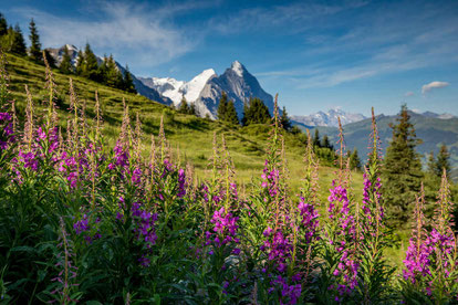 Bild: ©Jungfrau Region