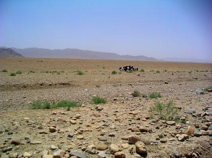 Auch Nutztiere wie Kühe und Schafe gibt es im Lebensraum. Foto: H. Seufer