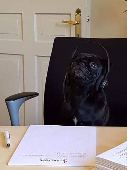 abasoft EVA Praxissoftware Bürohund