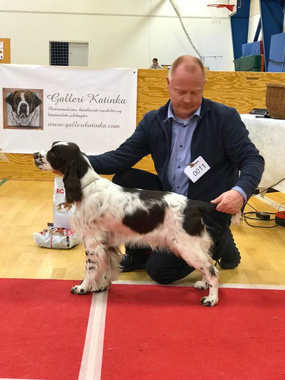"""Malwine vom Belauer See"", handled by Hans Peter Brohus, Kennel Clumbus, Photo: Heidi Lauritzen"