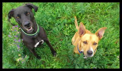 zwei Hundefreunde