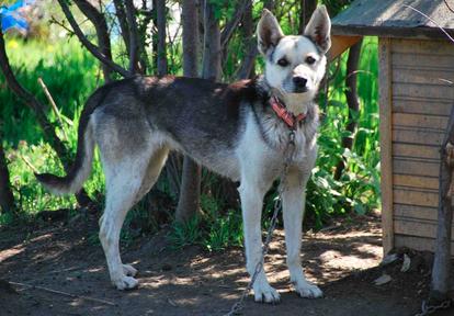 Tanja lebte lange Zeit als Kettenhund in Bulgarien.
