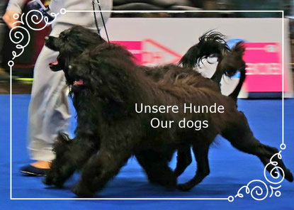 OUTSIDE THE BOX  Unsere Hunde/Our dogs  Ch. Go and Win J´Agua-Joy To The World & Ch. Boa Felicidade Estrela WDS 2017 Leipzig (Photo: Silke Hollje-Schumacher)