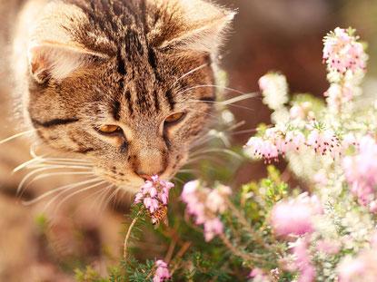 Katze - geruch