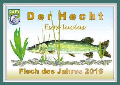 Der Hecht ist dieses Jahr der Fisch des Jahres 2016.