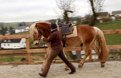 Die vorbereitende Arbeit an der Hand legt den Grundstein für die weitere Ausbildung des jungen Pferdes.