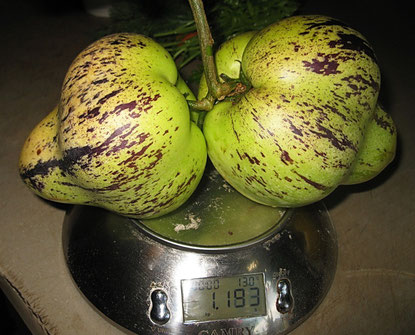Вкус не очень понравился, недозрелой  дыни с нотками ананаса, интересно то, что в плодах не оказалось семян, в первый год жизни растения из семян такое возможно.