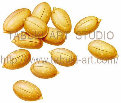 ピーナッツのイラスト peanut ビールのおつまみ