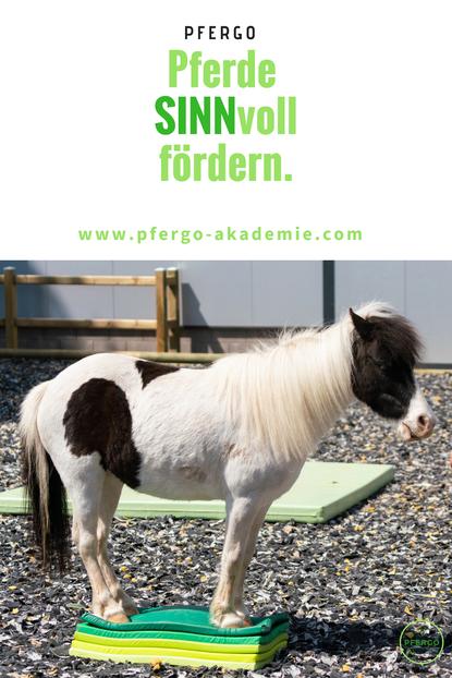 Pferdeergotherapie: Basissinne des Pferdes schulen