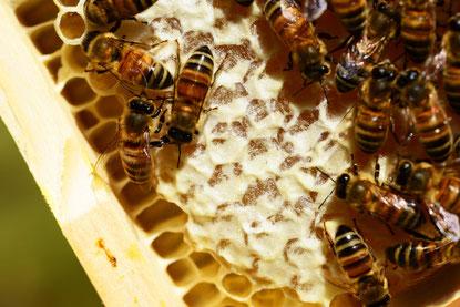 Honig wichtig für die Gesundheit