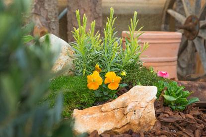 Saisoneröffnung Gärtnerei Hupp Höchberg, Frühlingsblumen und Frühlingspflanzen kaufen in Würzburg