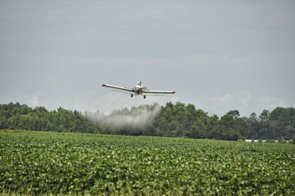Mit jedem Bissen Fleisch Monsanto unterstützen! - fair4world