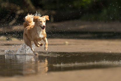 hundeshooting, hund im wasser, hundefoto, tierfoto, fotoworkshop,