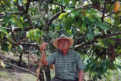 Don Arturo unter einem Kakaobaum