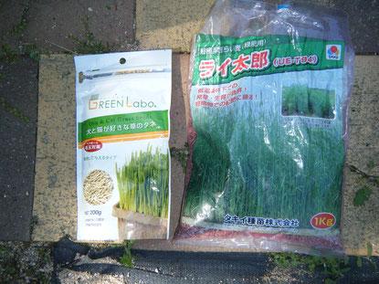 犬と猫が好きな草のタネの写真