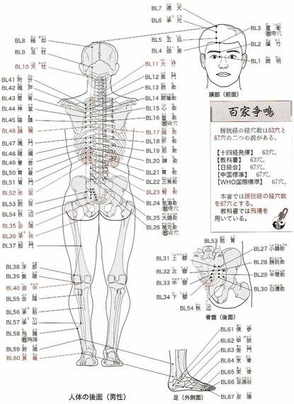足太陽膀胱経:委中、飛揚、崑崙