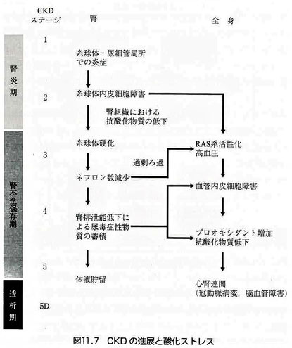 CKDの伸展と酸化ストレス
