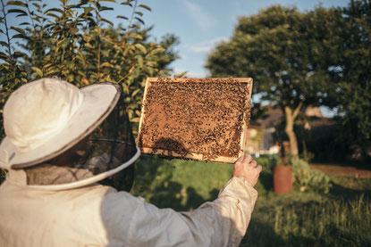 Essain d'abeilles Morbihan (Mathieu Audo apiculteur transhumant miel pain d'épices pollen)