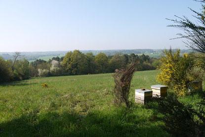 Miel et pains d'épices du Morbihan