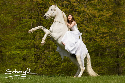 pferdeshooting mit zwei ganz besondere pferden pferdeshooting fotoshooting mit pferd. Black Bedroom Furniture Sets. Home Design Ideas