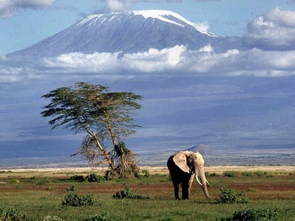 Amboseli Natural Reserve and Kilimanjaro Mount