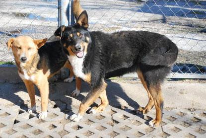 Lara (rechts) mit Mara-Luna (März 2015)
