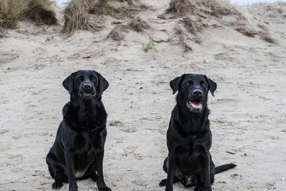 Elli & Enyo Onlineshop Hundesnacks