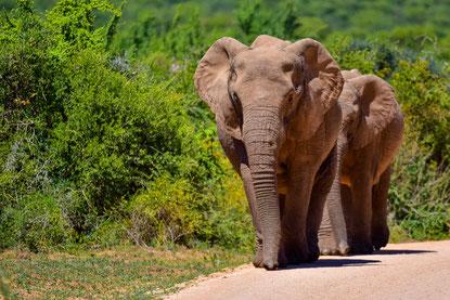 Die Strasse ist zweispurig, aber Elefanten haben Vortritt