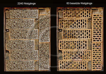 Insektenhotel Nisthilfe Insektennisthilfe Lochziegel Ziegel Hohlziegel Ziegelstein  Wildbienen insect hotel nesting aid bug house hollow perforated brick cavity gutter tile