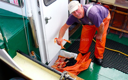 Pêcheur de langoustines