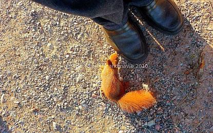 2 écureuils peu farouches