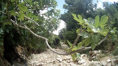 Italien Apulien Feige Nationalpark Gargano