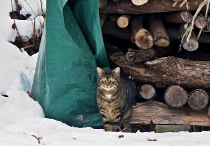 25. Januar 2017 - Wie ich doch den Winter hasse !