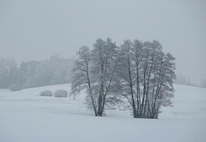 24. Januar 2017 - Eiskalte Schönheit im Nebel