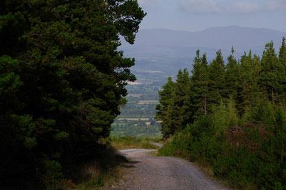 尾根から降りて林道の上を歩きます。Knockmealdownの北側の斜面には植林された樹林帯が広がっていて、樹林帯には伐採した木を運ぶため道が通してあるのです。